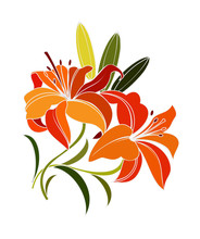 Scarlet Lily Flower