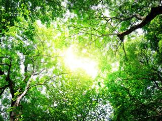 Fototapeta Do biura green leaves with sun