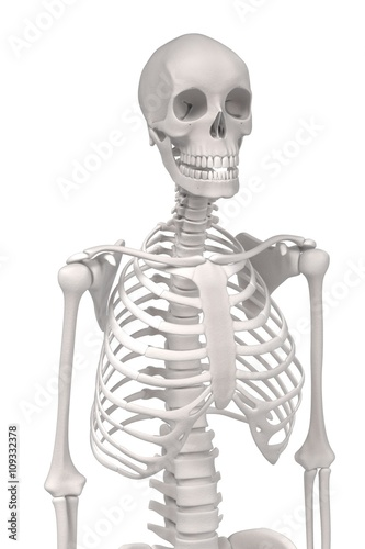 Garden Poster Sweet Monsters 3d renderings of female skeleton
