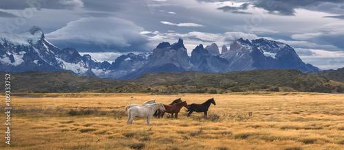 Fototapeta Torres del Paine National Park, Patagonia, Chile obraz