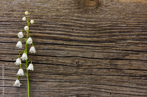 Tuinposter Lelietje van dalen white flower lily of the valley on a background of old gray barn board cracks. with space for posting information