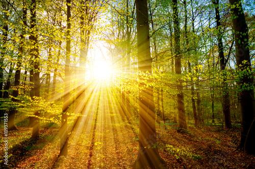 La pose en embrasure Jaune Sonnenuntergang im Wald