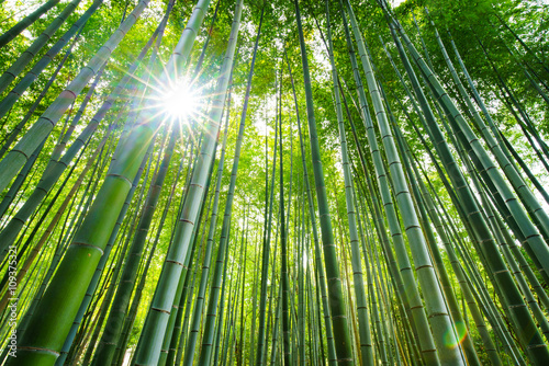Photo sur Toile Bambou Bamboo forest, Arashiyama, Kyoto, Japan