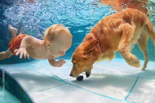 Funny Little Child Play With Fun And Train Golden Labrador Retriever Puppy In Swimming Pool