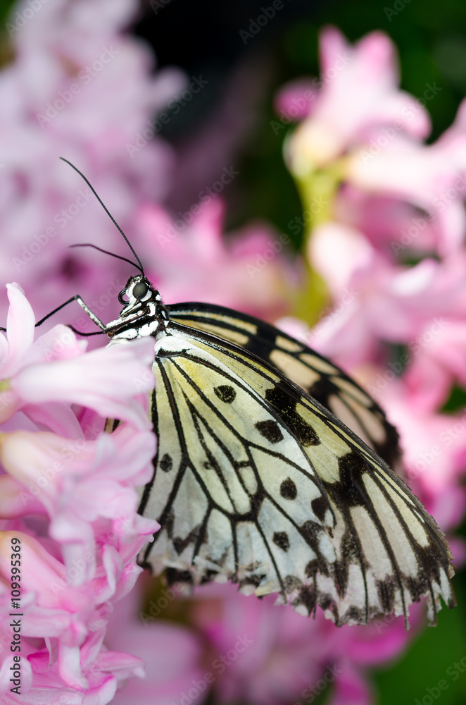 Fotografie, Tablou  Pretty pink flowers with butterfly