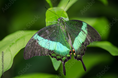 Beautiful butterfly Fototapet