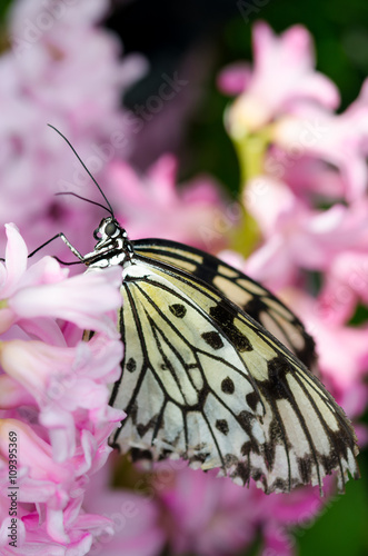 Pretty pink flowers with butterfly Fototapet