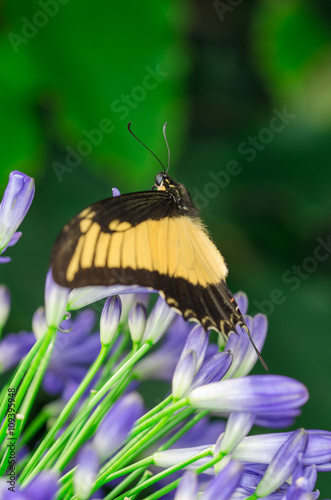 Beautiful butterfly on flower Tablou Canvas