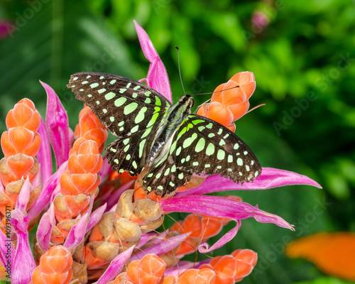 Fotografie, Tablou  Colorful butterfly on flowers