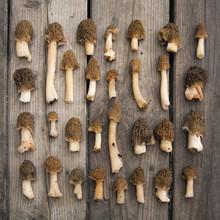 Morel Mushrooms On Wooden Back...