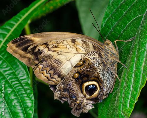 Fotografie, Tablou  Close up butterfly