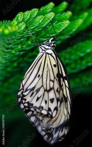 Fotografie, Tablou  Pretty butterfly hanging