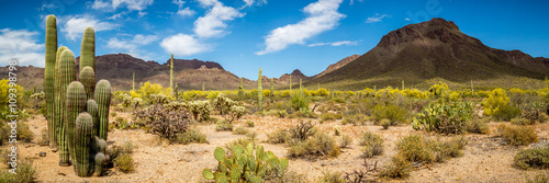 Aluminium Prints Drought Arizona Desert Landscape