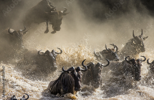 Deurstickers Antilope Wildebeests are crossing Mara river. Great Migration. Kenya. Tanzania. Masai Mara National Park. An excellent illustration.