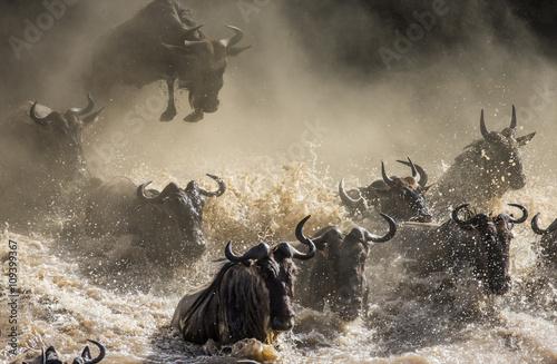 Foto auf AluDibond Antilope Wildebeests are crossing Mara river. Great Migration. Kenya. Tanzania. Masai Mara National Park. An excellent illustration.