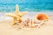 Summer concept. starfish on a beach