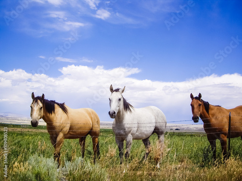 Photo  Horses of a different color
