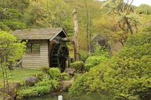 春の水車小屋