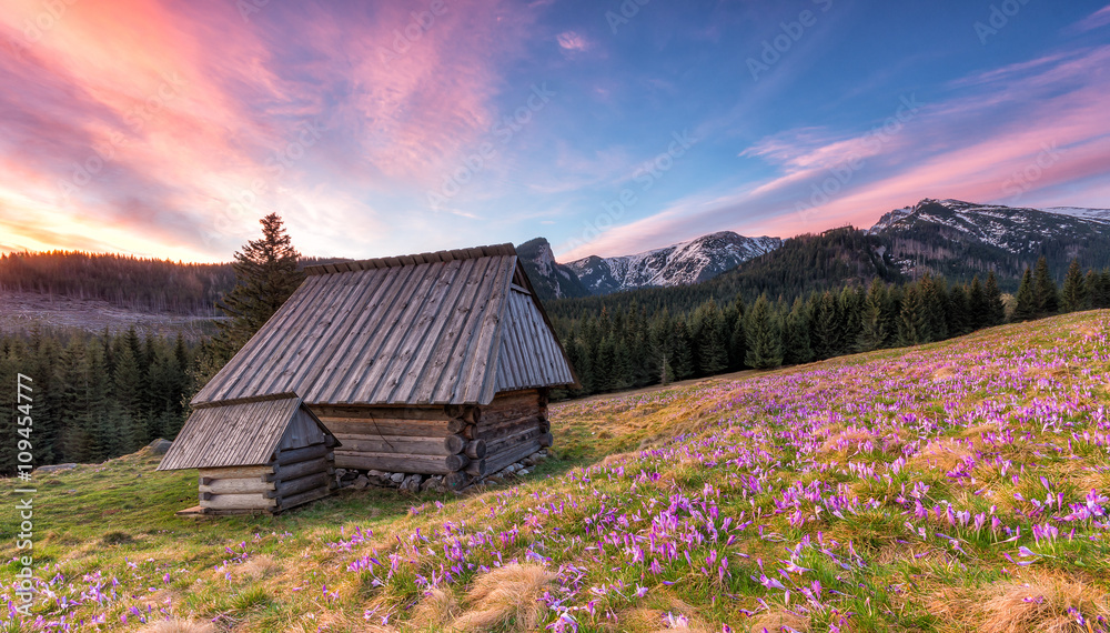 Fototapety, obrazy: Colorful morning with wooden hut in Tatra mountains, Poland