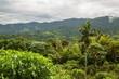Tropical montane cloud forest in Ecuador