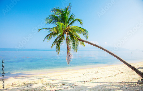 Wall Murals Blue tropical beach with coconut palm