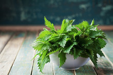 Young Nettle Leaves In Pot On ...
