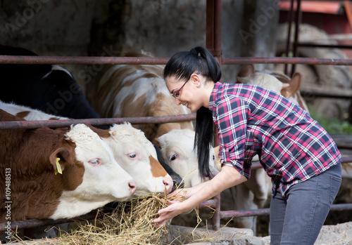 Fotografía  Muchacha del granjero con vaquillas