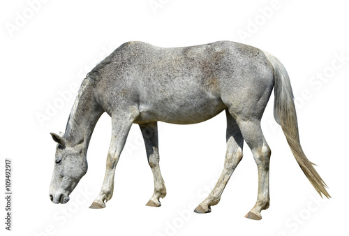 Photo  Horse isolated on a white background