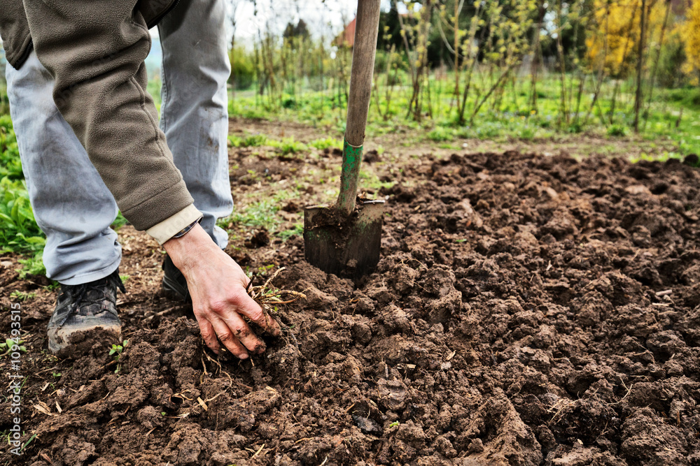 Fototapeta Soil cultivation in the Vegetable Garden