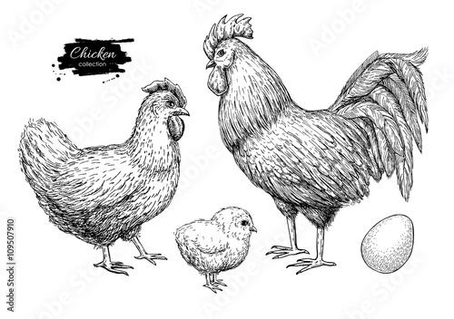 Canvas Print Vector chicken breeding hand drawn set