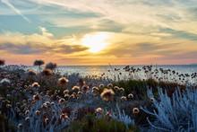 Sunset At North Beach Of Sardinia - Italy / Flowers On Dunes On Island