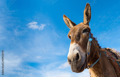 Deurstickers Ezel Donkey, farm animal in the Moroccan countryside on sky background. Copy space in right part for your text.