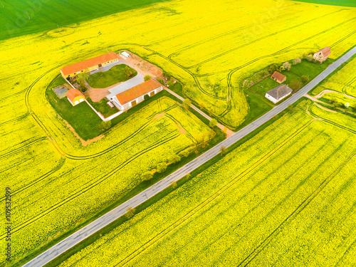 Fotobehang Zwavel geel Aerial view to rapeseed fields with farm house and road. Agricultural landscape in Czech Republic, Central Europe.