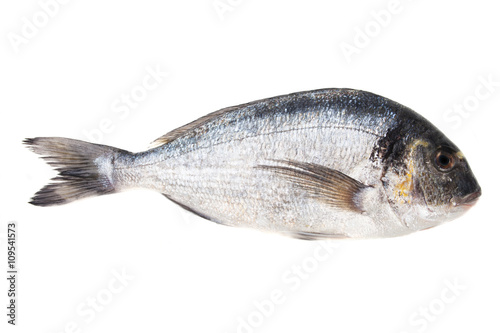 Poster Fish Raw bream fish on white background