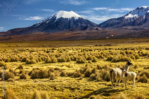 fototapeta na szkło Bolivia - Parinacota