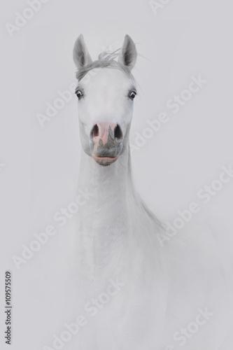 Siwy koń - fototapety na wymiar