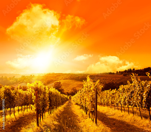 Foto op Plexiglas Oranje eclat wonderful italy tuscany hill at sunrise or sunset road scenic
