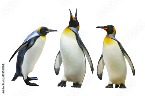 La pose en embrasure Pingouin Emperor penguins