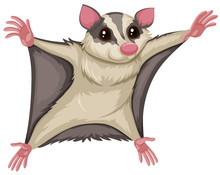 Flying Squirrel With Happy Face
