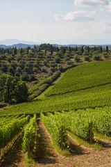 Panel Szklany Podświetlane Toskania vineyard - Tuscany