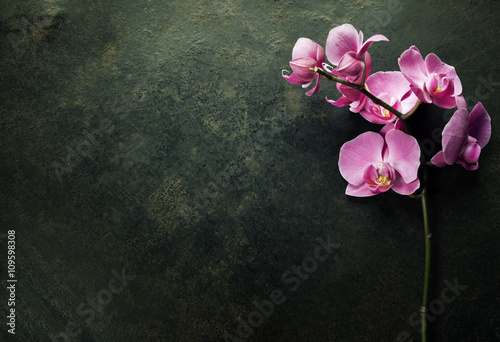 Pink orchid on a dark background