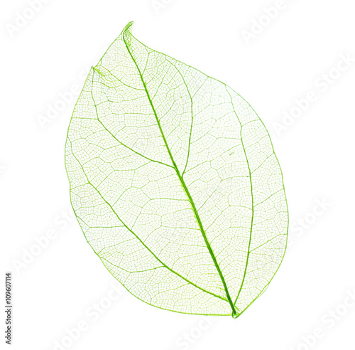 Poster Squelette décoratif de lame Skeleton leaf isolated on white