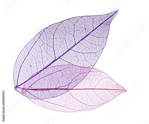 Poster Squelette décoratif de lame Skeleton leaves isolated on white