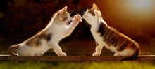 Zwei Junge Katzen Spielen Auf ...
