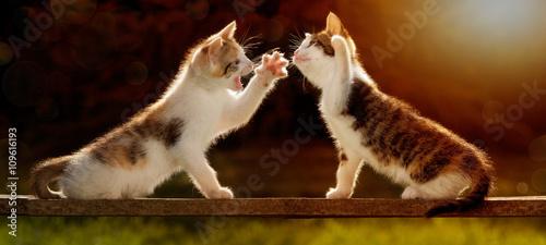 Fotografía zwei junge Katzen spielen auf einem Holzbrett im Gegenlicht