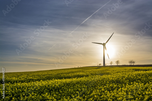 Fotografie, Obraz  Rape seed field at sunset with blue sky and wind turbine silhouette, cornwall, u