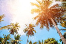 Palm Trees And Bright Sun On Blue Sky Background