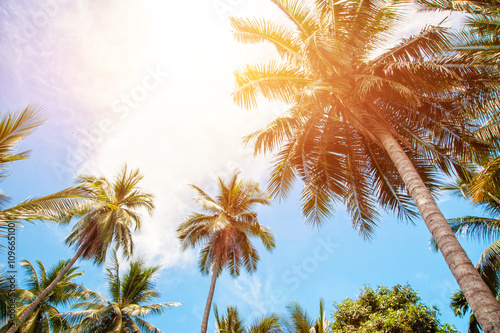 Canvas Prints Palm tree Palm trees and bright sun on blue sky background