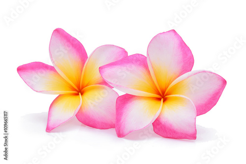 Foto op Canvas Frangipani Frangipani, Pumeria, Frangipanni, isolated on white background