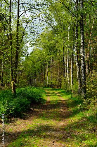 Tuinposter Weg in bos Leśna droga w środku lasu prowadzi w nieznane